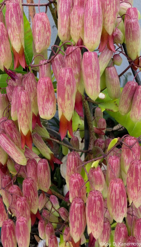 succulents04-4